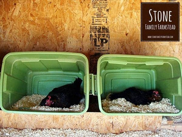 Chickens Chillin' at Stone Family Farmstead