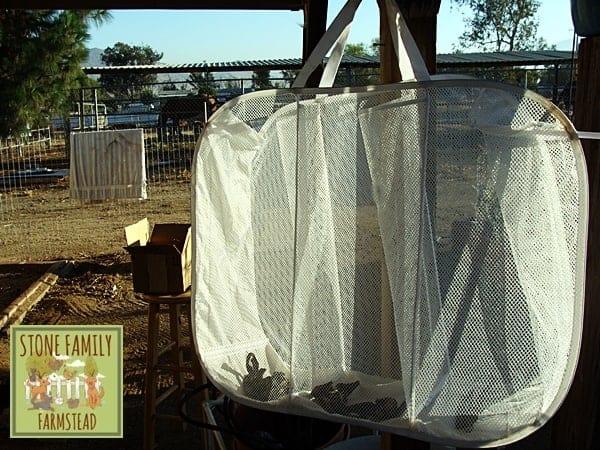 Drying Banana Peels - Stone Family Farmstead