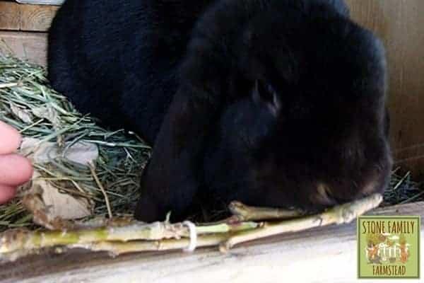 Safe Homemade and Healthy Rabbit Toys 2 - Stone family Farmstead