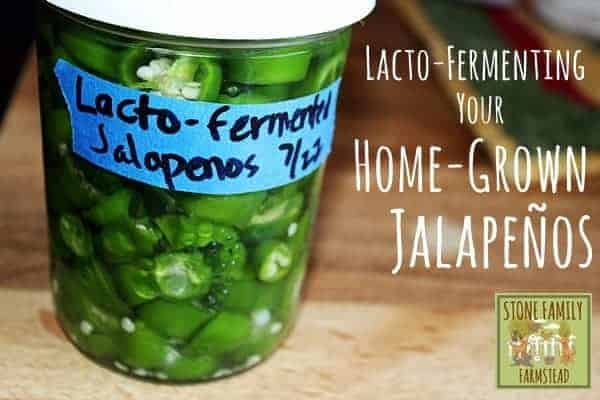 Lacto-Fermenting Your Home-Grown Jalapeños - Stone Family Farmstead