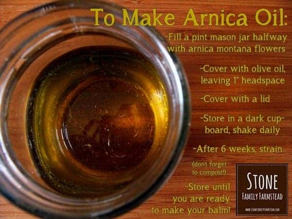 How to Make Arnica Oil - Stone Family Farmstead