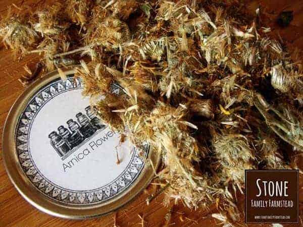 Arnica Herb Flowers - Stone Family Farmstead
