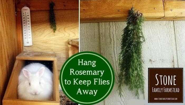 Hang Rosemary to Keep Flies Away - Stone Family Farmstead