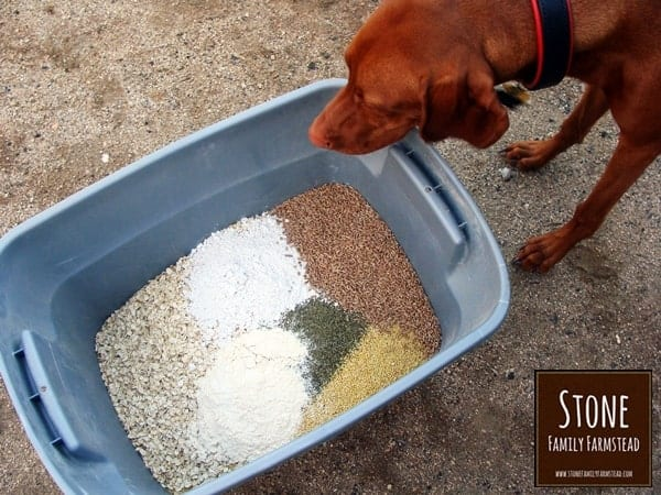 dog looking at a tub of feed ingredients - How to Make Chicken Feed for Layers - Stone Family Farmstead