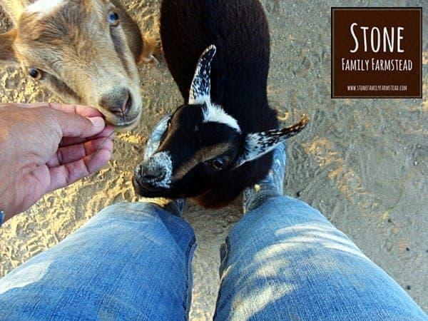 Naomi and Willow - Stone Family Farmstead