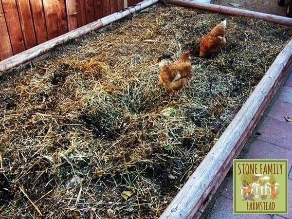 chickens are great composters - Stone Family Farmstead