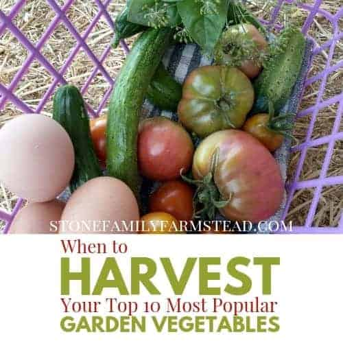 "basket of freshly harvested veggies and eggs with the title ""When to Harvest Your Top 10 Most Popular Garden Vegetables - Stone Family Farmstead"""
