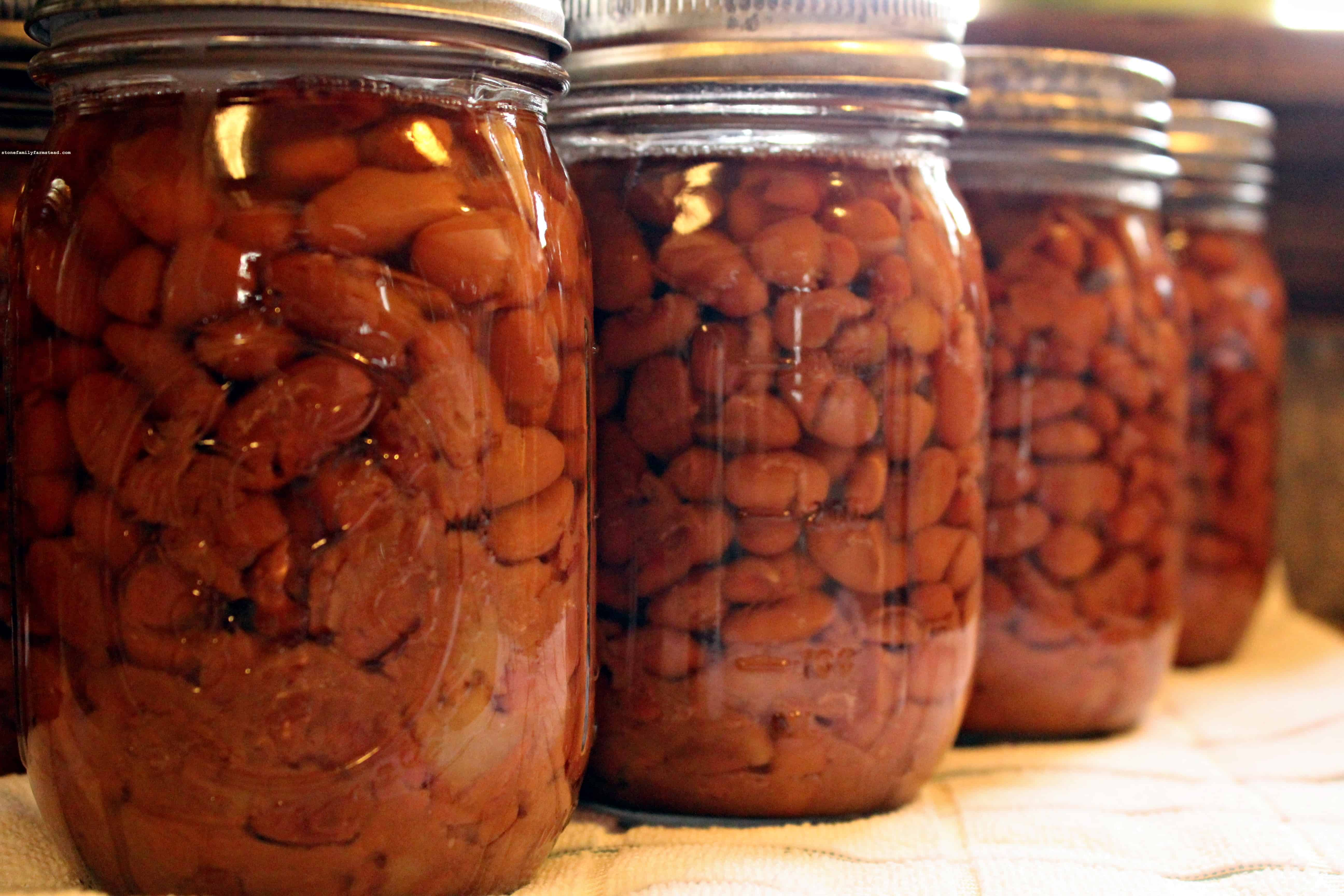 canned beans in a row - how to can food for beginners