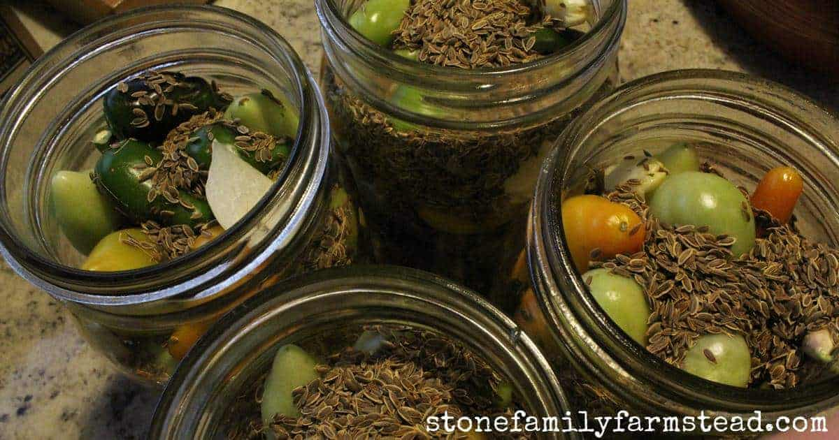 mason jars filled with unripe tomatoes, jalapeno peppers, garlic and dill - one of my ideas for using green tomatoes