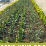 How to Start a Garden and Save Money - Stone Family Farmstead