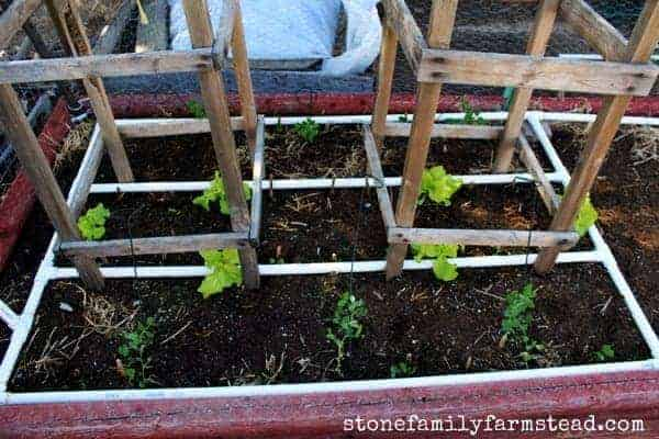 PVC irrigation setup - How to Start a Vegetable Garden: 25 Easy Steps from Scratch to Harvest - Stone Family Farmstead