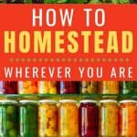 Homesteading for Beginners - Stone Family Farmstead