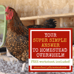 """chicken with the title """"Your Super Simple Answer to Homestead Overwhelm"""""""