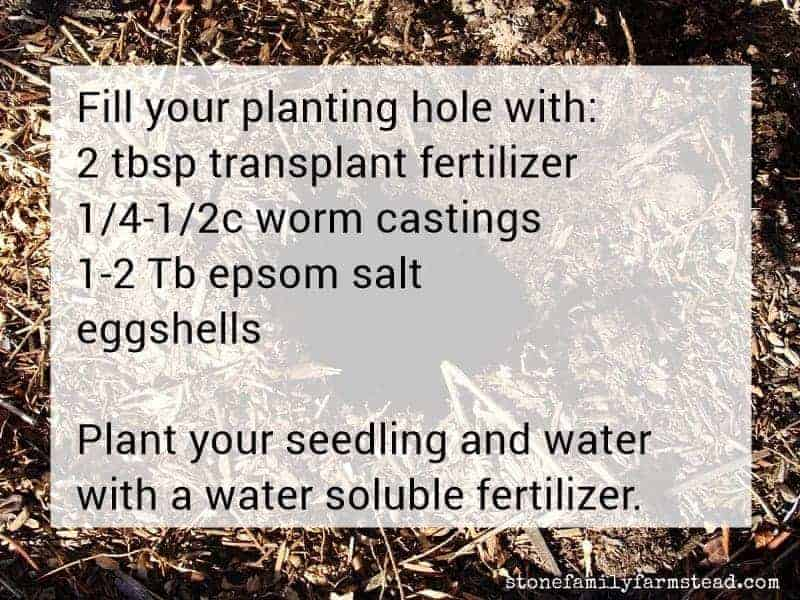 directions for filling a hole before transplanting - easy vegetable gardening