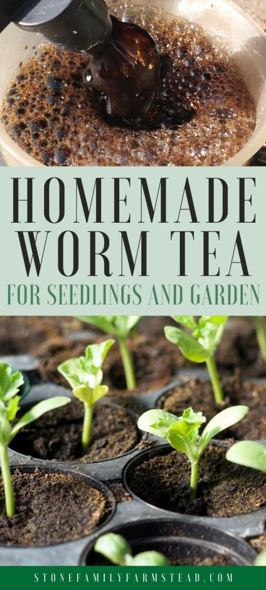How to Make Worm Casting Tea {Easy} - Stone Family Farmstead