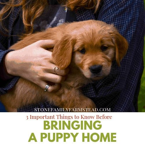 """brown puppy being held by a woman with long hair with the title """"3 Important Things to Know Before Bringing a Puppy Home - Stone Family Farmstead"""""""