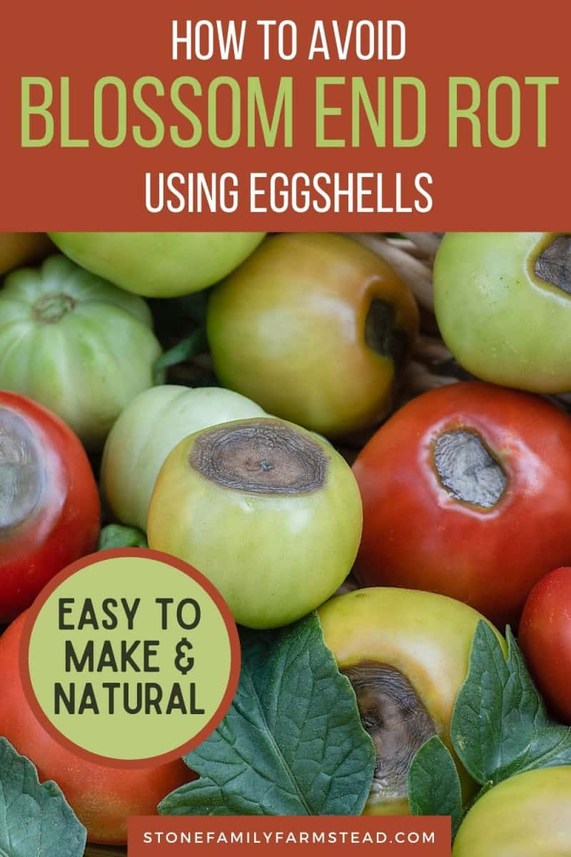 How to Avoid Blossom End Rot This Year with Eggshells - Stone Family Farmstead