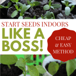 seedlings with the title Start Seeds Indoors Like a Boss! - Stone Family Farmstead