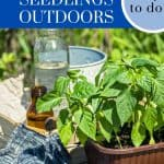 When and How to Transplant Seedlings Outdoors - Stone Family Farmstead