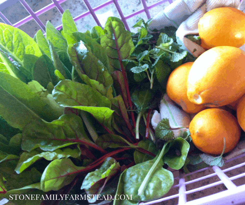 freshly harvested greens and lemons - Why Clean Eating is Powerful for the Homesteader - Stone Family Farmstead