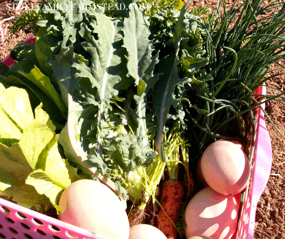 freshly harvested greens, carrots, and eggs - Why Clean Eating is Powerful for the Homesteader - Stone Family Farmstead