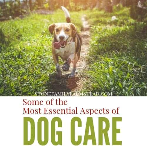"dog walking on a trail with the title ""Some of the Most Essential Aspects of Dog Care - Stone Family Farmstead"""