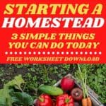 Starting a Homestead Now - Stone Family Farmstead