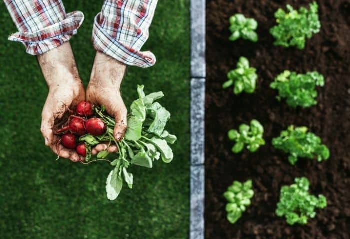 Starting a Homestead - Stone Family Farmstead