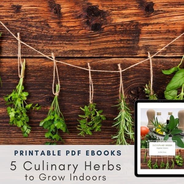 5 Culinary Herbs to Grow Indoors