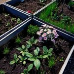 Tips for How to Keep Your Raised Bed Soil Healthy - Stone Family Farmstead
