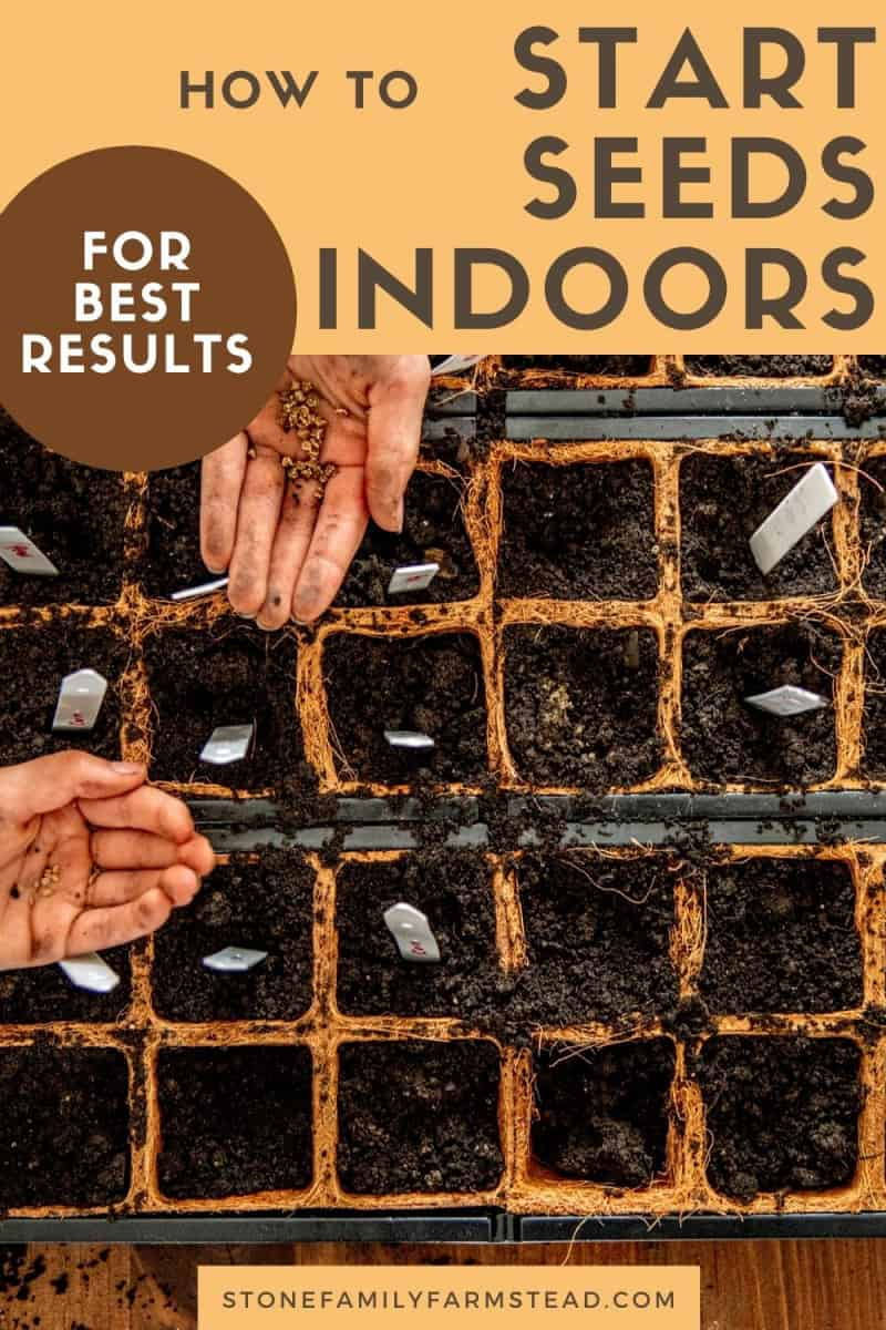 How to Start Seeds Indoors for Best Results - Stone Family Farmstead